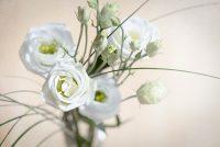 Lisianthus in weiß