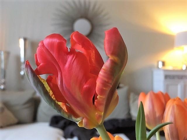 Papageien Tulpen