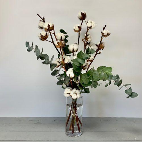 Baumwolle und Eukalyptus